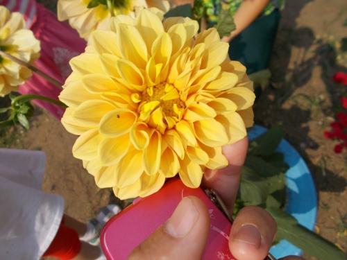 День цветов