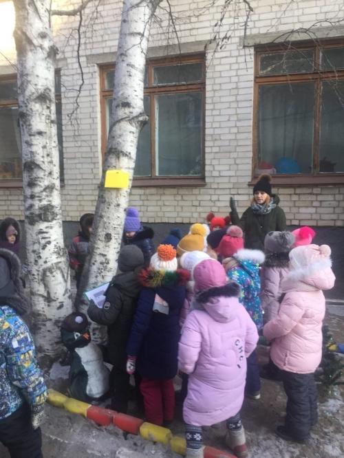 Целевая прогулка по территории детского сада – Наши деревья