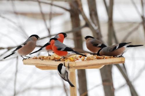 """Акция: """"Покормите птиц зимой"""""""