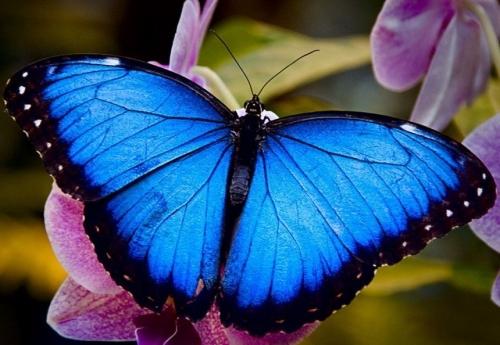 """Занятие по художественно-эстетическому развитию на тему: Обрывная аппликация """"Бабочка"""""""