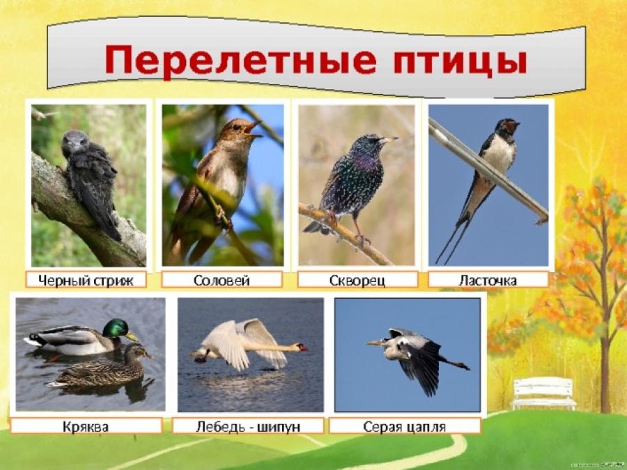 Фото и названия перелетных птиц